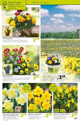 Aktueller Pflanzen Kölle Prospekt, Pflanzen mit Liebe., Seite 2