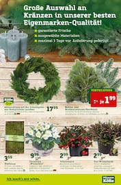 Aktueller Pflanzen Kölle Prospekt, Ich mach's mir schön , Seite 7
