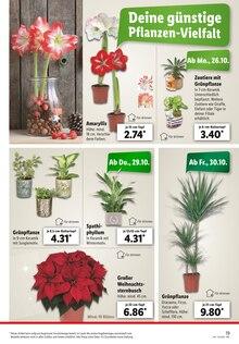 Garten im Lidl Prospekt Dein Einkauf -  Schnell erledigt! auf S. 18