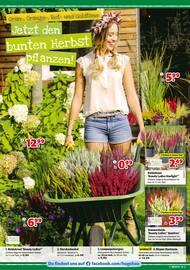 Aktueller hagebaumarkt Prospekt, Herbstlich Willkommen zum Sparen, Seite 2