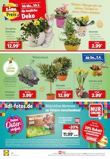 Garten im Lidl Prospekt Große Fresttags - Sparerei auf S. 27