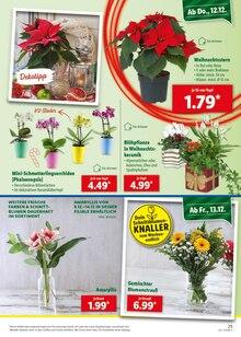 Garten im Lidl Prospekt Marken-Hammer der Woche auf S. 28