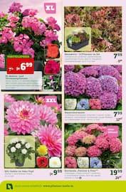 Aktueller Pflanzen Kölle Prospekt, Am 17. und 18. Mai 20 %, Seite 2
