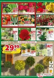 Aktueller hagebaumarkt Prospekt, Gartencenter, Seite 3