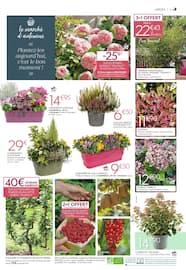 Catalogue Truffaut en cours, Le marché d'Automne : bulbes, rosiers, arbustes... À vos plantations !, Page 3
