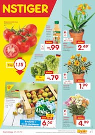 Aktueller Netto Marken-Discount Prospekt, DAS WERDEN GÜNSTIGE URLAUBSTAGE, Seite 31