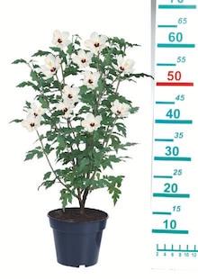 Garten im aktuellen Lidl Prospekt für 5.99€