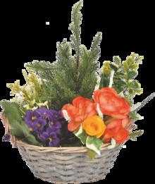 Le panier en rotin de tuyas, begonias et azalées à Centrakor dans Flaine