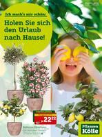 Aktueller Pflanzen Kölle Prospekt, Holen Sie sich den Urlaub nach Hause! , Seite 1