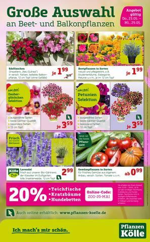 Aktueller Pflanzen Kölle Prospekt, Große Auswahl an Beet- und Balkonpflanzen, Seite 1