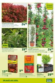 Aktueller Pflanzen Kölle Prospekt, Pflanzen-Kölle bringt's! , Seite 3