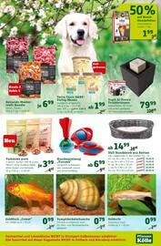 Aktueller Pflanzen Kölle Prospekt, Am 17. und 18. Mai 20 %, Seite 11