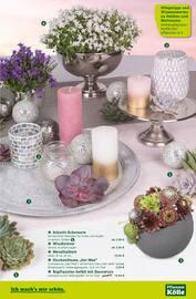 Aktueller Pflanzen Kölle Prospekt, Am 17. und 18. Mai 20 %, Seite 3