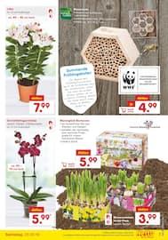 Aktueller Netto Marken-Discount Prospekt, Frühlingshafte Angebote, Seite 7