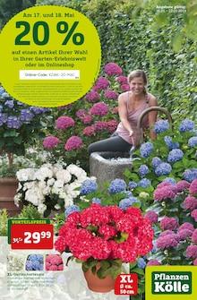 Pflanzen Kölle - Am 17. und 18. Mai 20 %