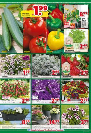 Aktueller hagebaumarkt Prospekt, Gartencenter, Seite 2