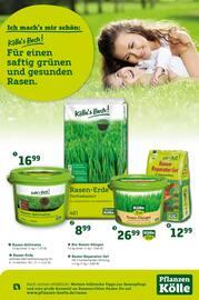 Aktueller Pflanzen Kölle Prospekt, Für einen saftig grünen und gesunden Rasen., Seite 1
