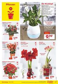 Aktueller Netto Marken-Discount Prospekt, Weihnachten wird lecker, Seite 3