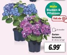 Garten im aktuellen Lidl Prospekt für 6.99€