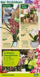 Aktueller Pflanzen Kölle Prospekt, Am 14. Februar ist Valentinstag , Seite 5
