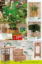 Aktueller Pflanzen Kölle Prospekt, Ich mach's mir schön!, Seite 4