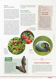 Aktueller BAUHAUS Prospekt, Mehr Natur!, Seite 37